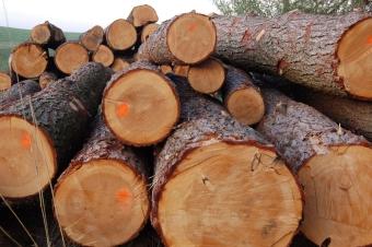 Как бесплатно получить 150 кубов леса на строительство дома от государства?
