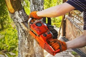 Ответственность за спиленное дерево